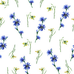Fototapeta Łąka Seamless pattern with yellow rocket and blue chicory flowers. Hand drawn watercolor painting on white background.