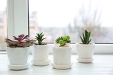 Pots with succulents on windowsill