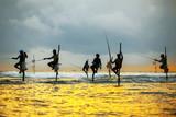 Tradycyjni rybacy na kijach przy zmierzchem w Sri Lanka. - 135093260