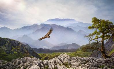 Fototapeta Natura Raubvogel am Himmel bei Sonnenaufgang im Hochgebirge
