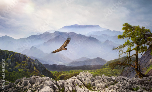 Foto  Raubvogel am Himmel bei Sonnenaufgang im Hochgebirge