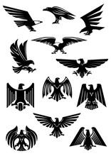 Eagle Or Falcon, Aquila Or Haw...