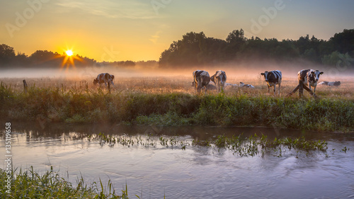 Leinwand Poster Cows in meadow on bank of Dinkel River at sunrise