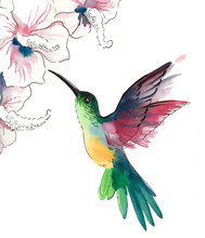 Watercolor Colibri