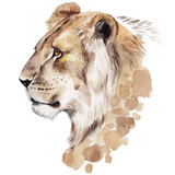 Watercolor lion portrait. Hand drawn animal illustration - 135164894