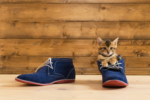 Kitten Sitting In Blue Shoes On The Floor