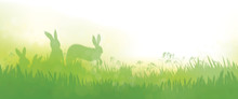 Vector  Rabbits In  Grass Natu...