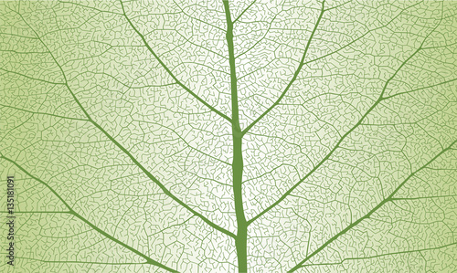 Recess Fitting Macro photography Leaf with rib, close up