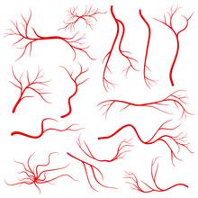 Human Eye Veins, Vessel, Blood Arteries Isolated On White Vector Set
