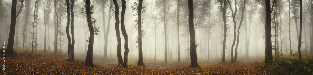 Fototapety, obrazy: Panoramic forest landscape. Trees and fog on rainy day in natural woods panorama