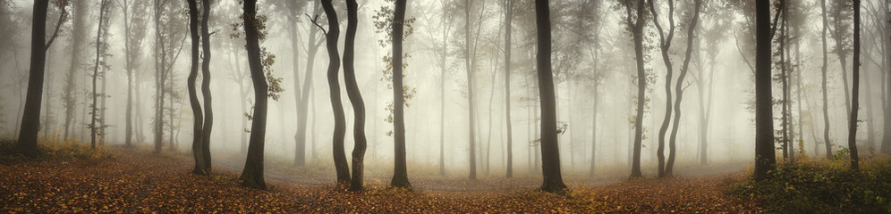 Panoramic forest landscape. Trees and fog on rainy day in natural woods panorama