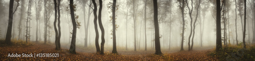 Fototapeten Wald Panoramic forest landscape. Trees and fog on rainy day in natural woods panorama