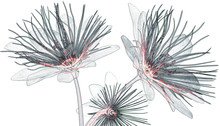 X-ray Image Flower Isolated  ,...