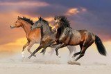 Fototapeta Konie - Three bay horse run gallop in desert dust
