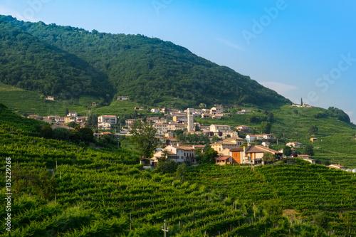 Foto auf Gartenposter Reisfelder Guia surrounded by prosecco vinyards