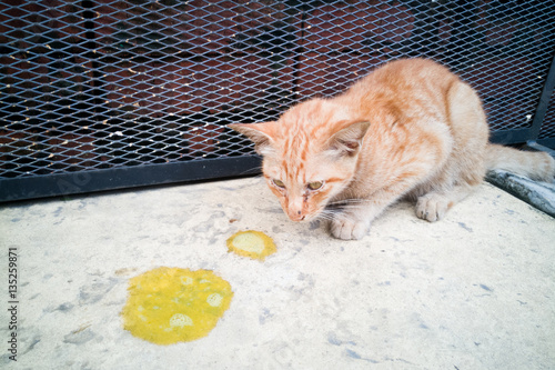 Fotografie, Obraz  Sick ill pet cat with vomit on floor