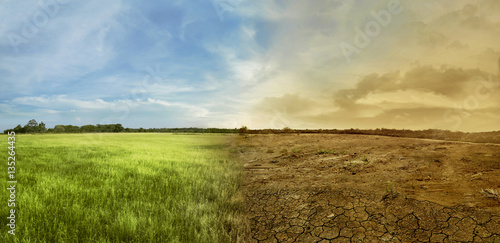 Fotografie, Obraz  Landscape of meadow field with the changing environment