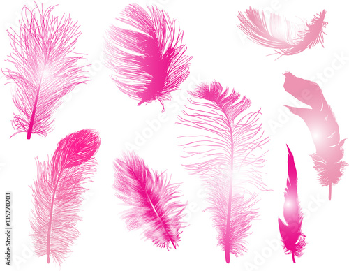 eight pink feathers isolated on white