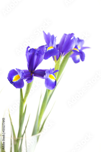 Garden Poster Iris Bouquet of beautiful irises in vase isolated on white background