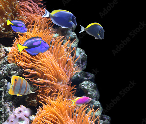 Staande foto Koraalriffen Underwater scene with tropical fish