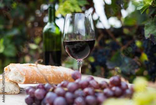 glass of wine and ripe grapes in the vineyard