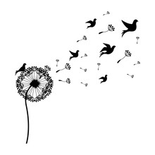 Silhouette Dandelion With Fly ...