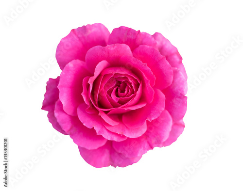 Fotografia  Top view of beautiful shocking pink rose with sun light isolated on white background with clipping path