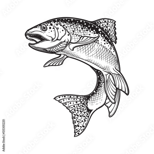 Fotografie, Obraz Realistic intricate drawing of the rainbow trout jumping out