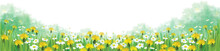 Vector Summer Nature  Background, Chamomiles And Dandelions Fiel