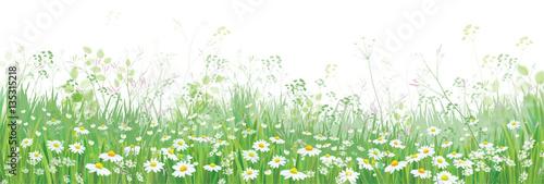 Wektor kwitnie pole kwiaty, natury granica odizolowywająca.
