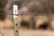 Close Up Of Old Barbed Wire Fence Post