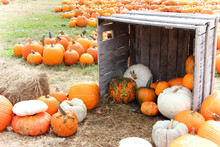 Pumpkins And Gourds On Display In A Wooden Crate