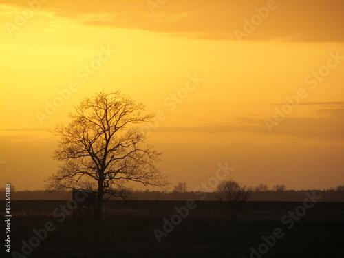 Papiers peints Corail Baum im Sonnenuntergang