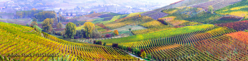 Photo Stands Blue sky amazing vast plantation of grape in Piemonte- famous vine region of Italy