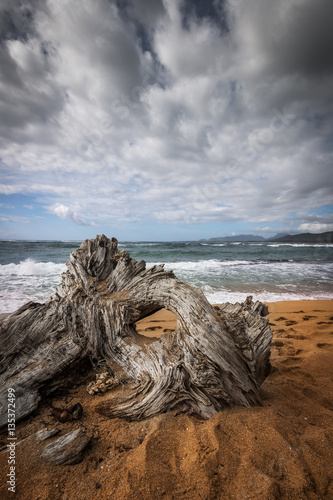 Driftwood on the beach Wallpaper Mural