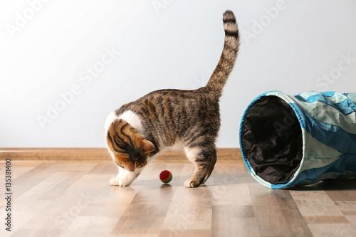 Śliczny śmieszny kot bawić się w domu
