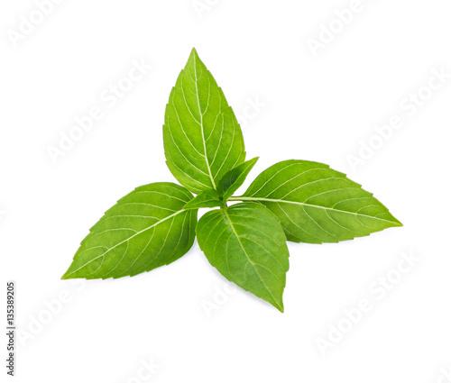 Thai basil leaf or sweet basil isolated on white background.
