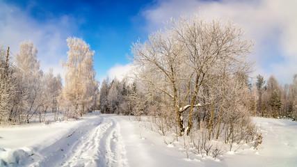 Fototapetaзимний пейзаж в лесу с деревьями в инее, Россия, Урал, февраль