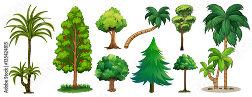 Photo Stands Kids Different types of trees