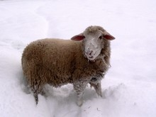 Winter Photo On A Farm In The ...