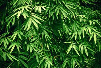 FototapetaBamboo leaf pattern on surface