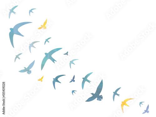 Photo  Birds in the sky – Background