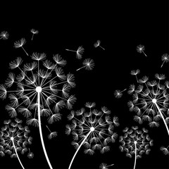 Fototapeta Dmuchawce Black background with stylized white dandelions