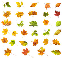 Isolated Leaf Collection
