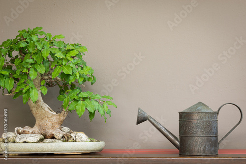 Aluminium Prints Bonsai vintage style watering can and Bonsai tree on wood shelf with br