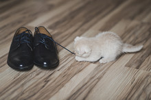 The Little White Kitten Playing With Shoes 7435.