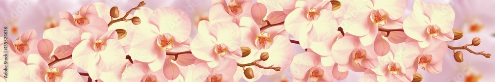 Fototapety, obrazy: Orchid flowers