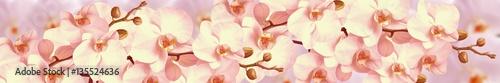Fototapeta Orchid flowers obraz