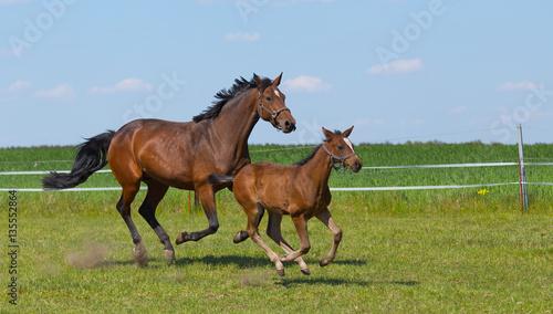 Fotografie, Obraz  Fliegende Pferde