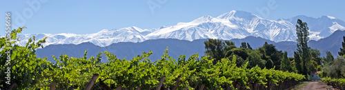 Foto auf Gartenposter Weinberg Andes & Vineyard, Lujan de Cuyo, Mendoza